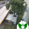 The Tree in a Gas Station | Green Wings Award