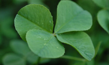 Eco-Friendly St. Patrick's Day Activities